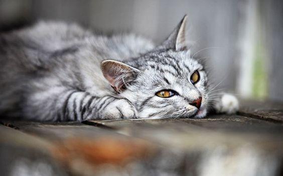 Cat Hookworm