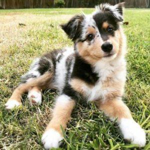 Dog Endocrine