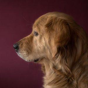 Dog Anti-inflammatory