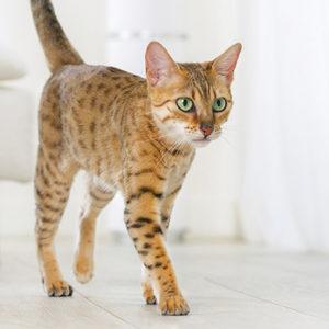 Cat Mousse