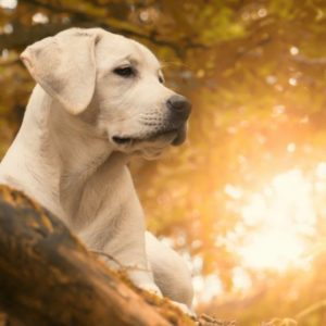 Dog Muscle Relaxant